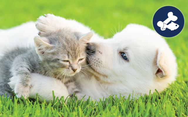 puppy-kitten-uber