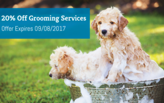 promotion-grooming-services