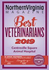 2019 best veterinarians