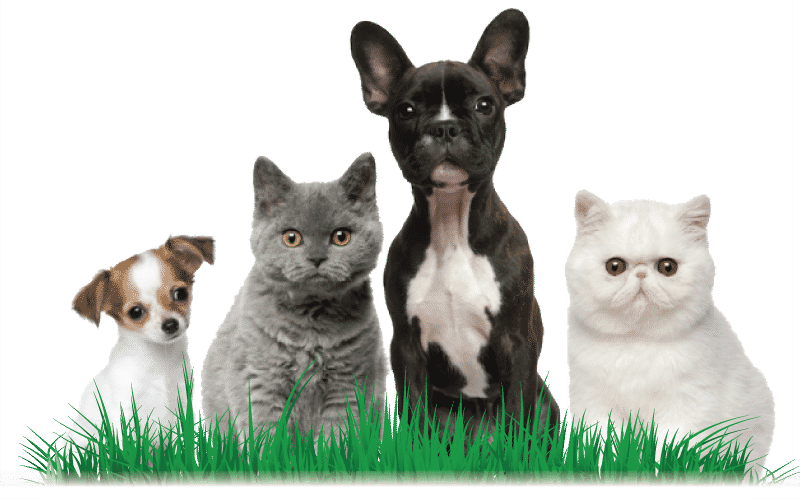 dogs and cats mission statement
