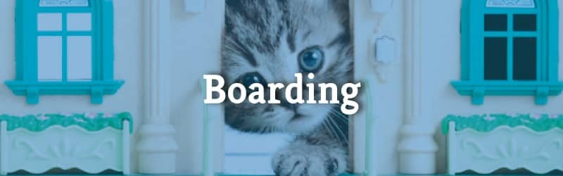 mobile boarding