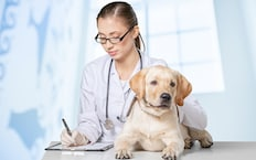 nav-blog-golden-puppy-checkup-233x145o