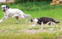 nav-contact-us-cat-dog-uber-250×156