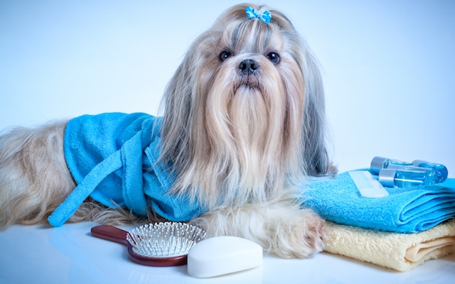 pampered dog grooming
