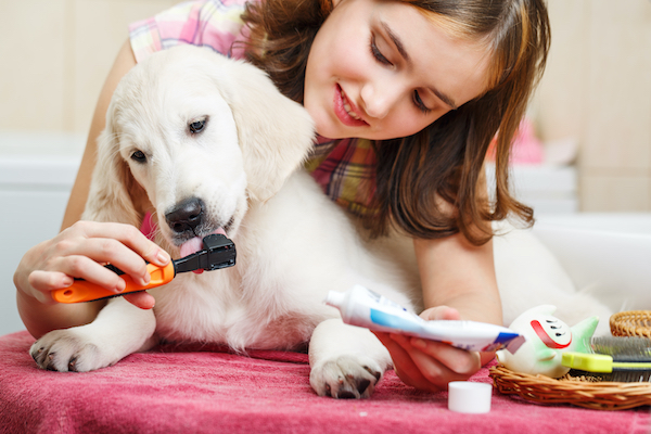 girl brushing dogs teeth